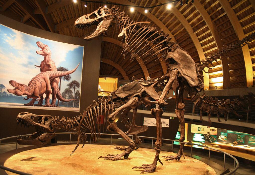 MUJA-Tyrannosaurus