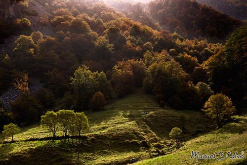 Redes otoño, por Manuel S.Calvo