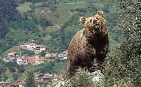osos-jpg