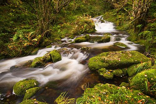 Muniellos en Asturias